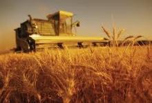 Четвертое место в мире заняла Молдова по темпам роста внутренних цен на пшеницу