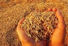 –2,4% — прогноз ООН по производству зерна в 2014 г.