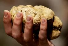 В 100 тысяч евро получил штраф итальянец за контрабанду трюфелей