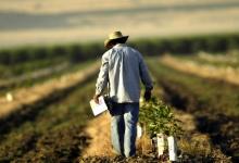 Работу аграриев осложнит присоединение РМ к каталогу сортов сельхозрастений ЕС